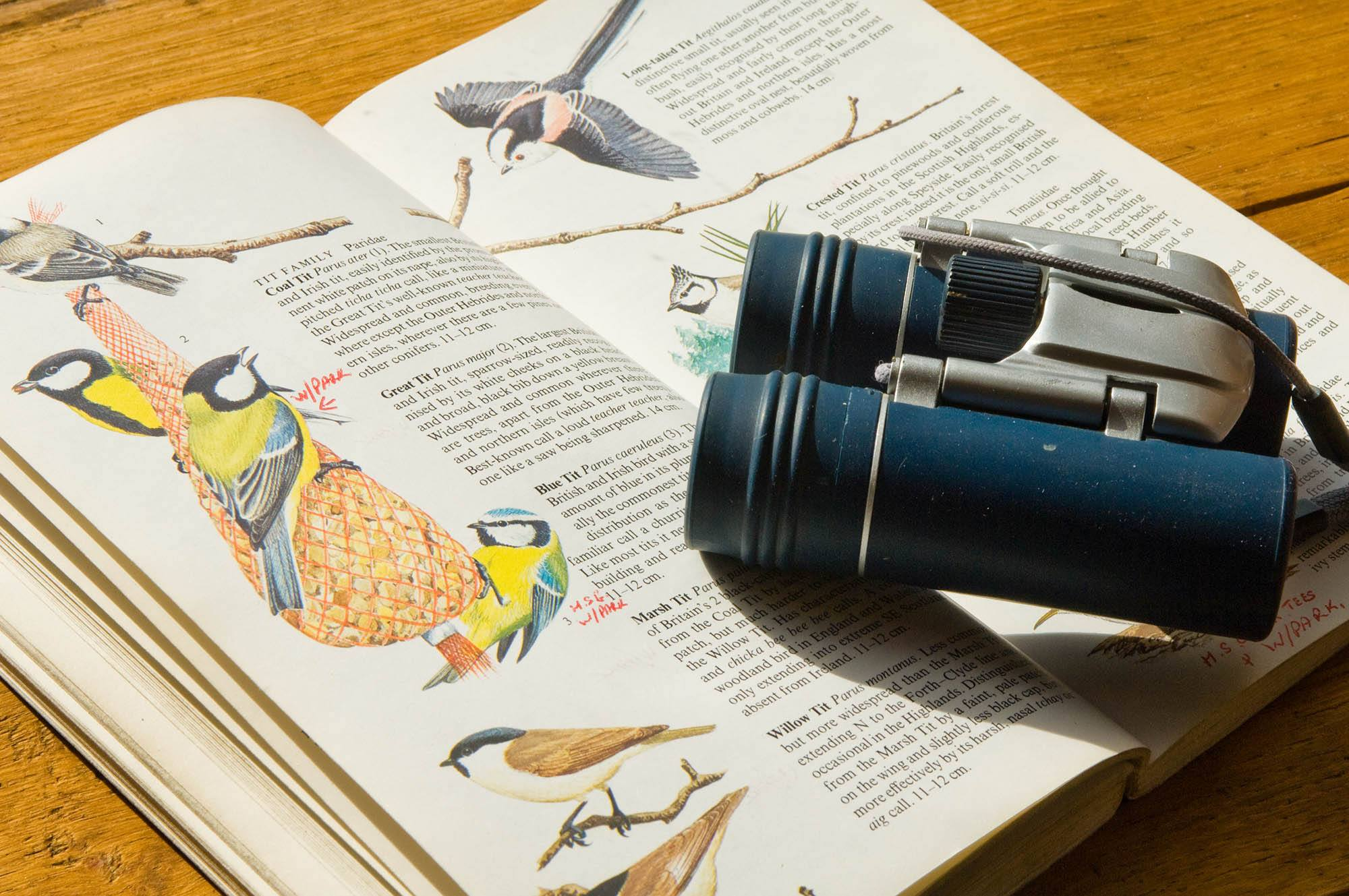 dover wild life, bird spotting